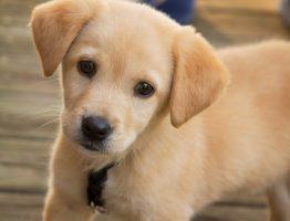 insegnare-al-cane-non-fare-i-bisogni-in-casa